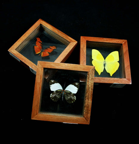 Assorted Double Glass Framed Butterflies-Insects-Butterflies By God-PaxtonGate