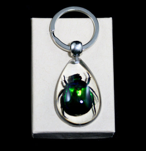 Rutelian Beetle Keychain-Insects-Real Insect Company-PaxtonGate