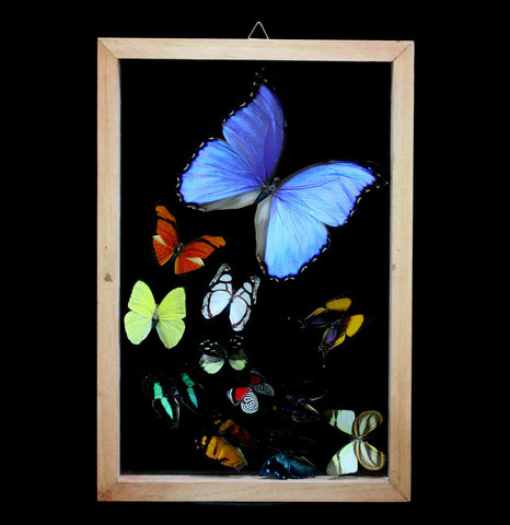 Sweeping Pattern Butterfly Collection-Insects-Butterflies By God-PaxtonGate
