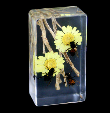 Honeybees and Flowers in Acrylic-Insects-Real Insect Company-PaxtonGate