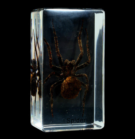 Wolf Spider in Acrylic - PaxtonGate