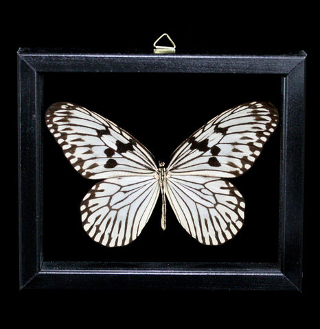 Double Glass Framed Idea Idea Idea Butterfly-Insects-Al & Judy Scramstad-PaxtonGate