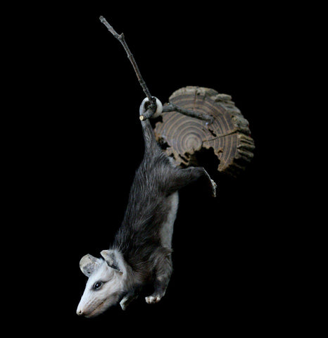 Hanging Taxidermy Opossum - PaxtonGate