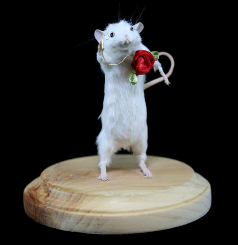 Dapper Dan Taxidermy Mouse-Taxidermy-Taxadoreme-PaxtonGate