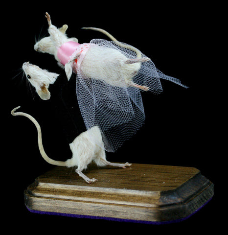 Naughty Prancing Taxidermy Mice - PaxtonGate