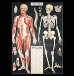 Anatomy Poster Wrap - PaxtonGate