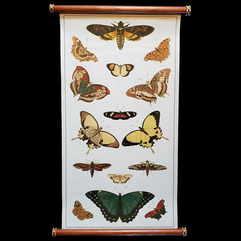 Butterflies Wall Chart-2D-Thicket Sundries-PaxtonGate