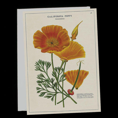 California Poppy-Cards-Cavallini & Co.-PaxtonGate