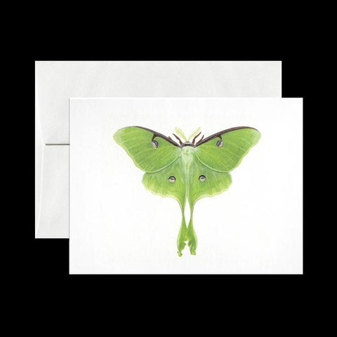 Luna Moth Card-Cards-Open Sea Design Co.-PaxtonGate