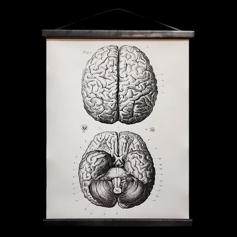 Brains Hanging Canvas Chart-2D-Curious Prints-PaxtonGate