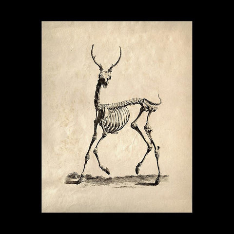 "Deer Skeleton 8"" x 10"" Print-2D-Curious Prints-PaxtonGate"