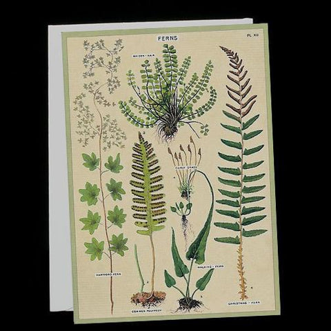 Ferns-Cards-Cavallini & Co.-PaxtonGate
