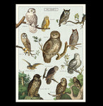 Owl Chart Poster Wrap-2D-Cavallini & Co.-PaxtonGate