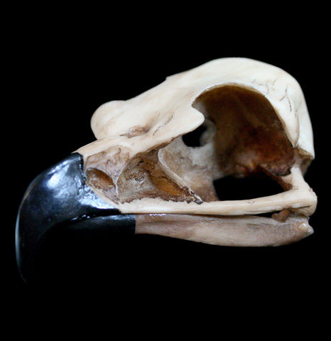 Replica Golden Eagle Skull - PaxtonGate