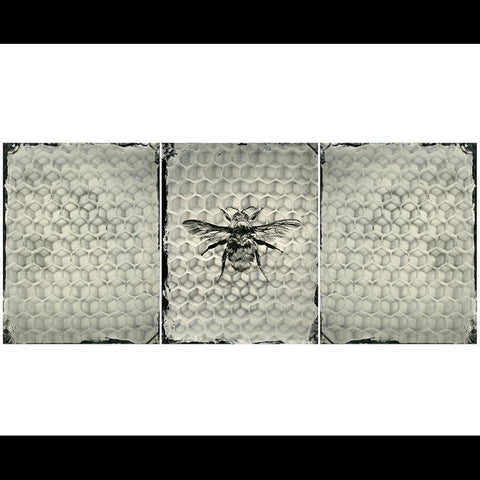 Bee on Honeycomb Triptych Pigment Print-2D-Chris Parsons-PaxtonGate