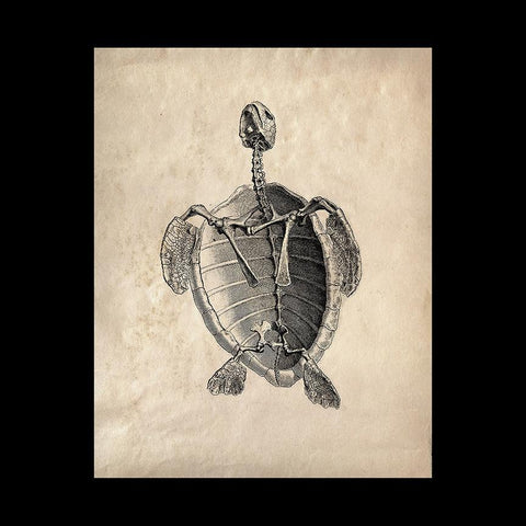 "Sea Turtle Skeleton 8"" x 10"" Print-2D-Curious Prints-PaxtonGate"