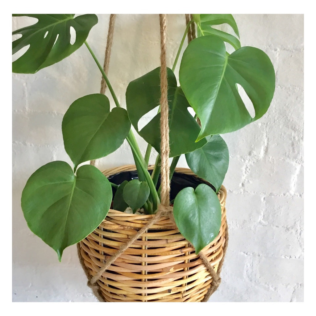Rattan Basket with Jute Hanger -  Small