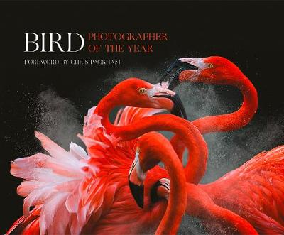 Bird Photographer of the Year: Collection 3