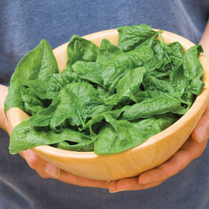 "Spinach Bloomsdale - 4 1/2"" Pot (Edibles)"