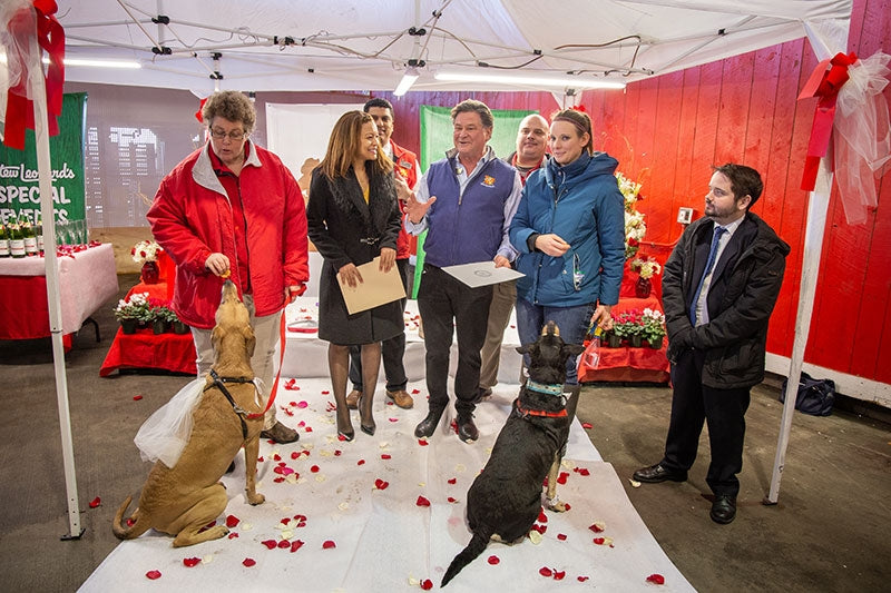 Barbara Murphy, Legislator Perez, Stew Leonard Jr, Shari Wagner, and Eamonn O'Brien serve as wedding party, officiant, and witnesses to the union of these two VERY GOOD DOGS.