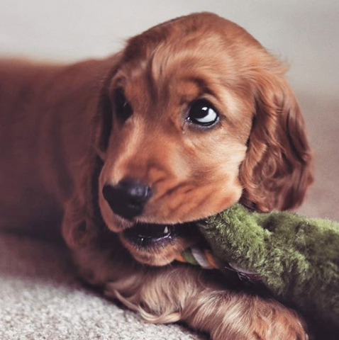 The 10 Best Small Dog Breeds For An Apartment Pet Luxury Online