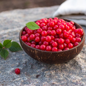 Nanking Cherry Shrub