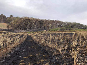Adelaide Hills Busfire, Cherry + Apple Grower of Lenswood : bush fire burns orchard