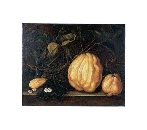 STILL LIFE WITH YELLOW SQUASH