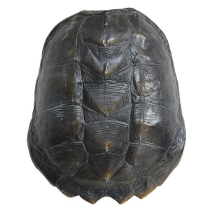Artificial Turtle Shell Black