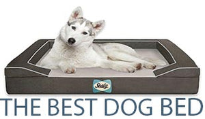 The Best Dog Bed