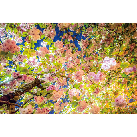 Ingooood Wooden Jigsaw Puzzle 1000 Pieces for Adult-Pink flowers - Ingooood jigsaw puzzle 1000 piece