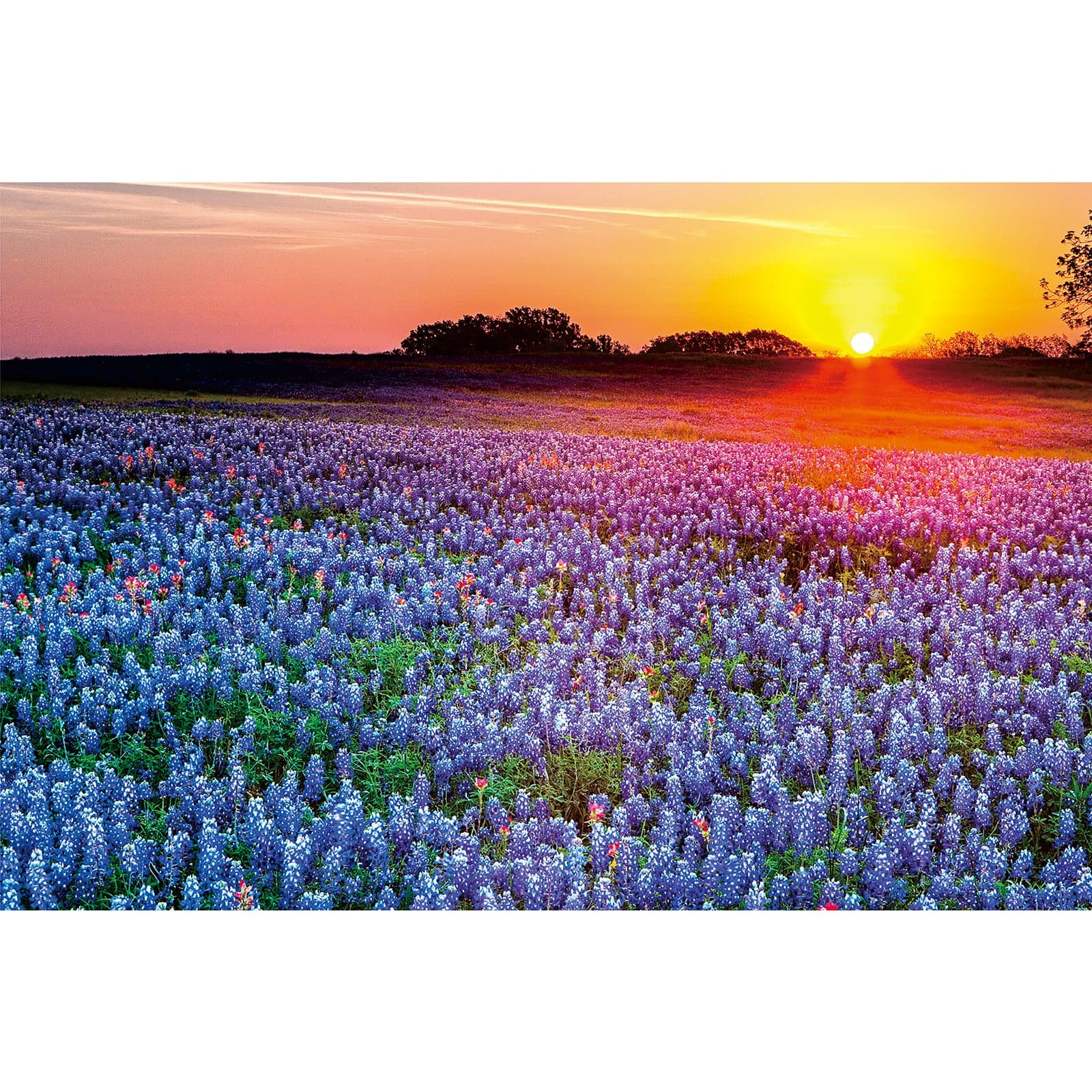 Ingooood Wooden Jigsaw Puzzle 1000 Pieces for Adult-Lavender in the sunset - Ingooood jigsaw puzzle 1000 piece