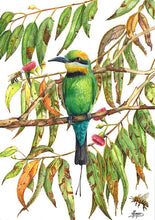Load image into Gallery viewer, Rainbow Bee Eater - A3 Print in Frame