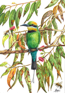 Rainbow Bee Eater - A3 Print in Frame