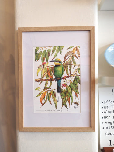 Rainbow Bee Eater - A4 Print in Frame