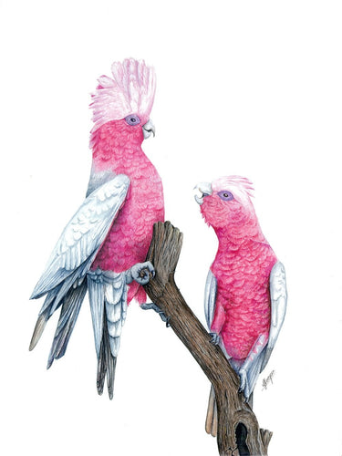 Pink & Grey Galahs - Mini Print in Frame