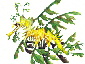 Leafy Sea Dragon - Greeting Card