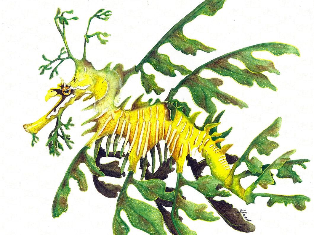 Leafy Sea Dragon - Mini Framed Prints