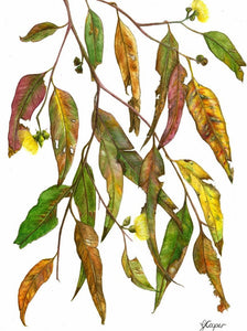 Watercolour Gum Leaves - Greeting Cards