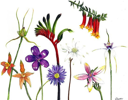 Australian Wildflowers - A2 Print in Frame