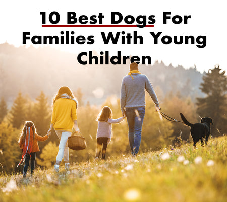 10 Best Dogs For Families With Young Children
