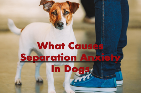 What Causes Separation Anxiety In Dogs