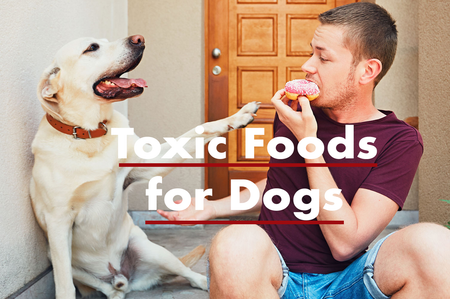 Which Human Foods Are Toxic To Dogs?