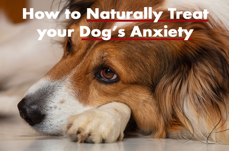 How To Help Your Dog Overcome Anxiety Naturally