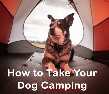 How To Take Your Dog Camping This Summer
