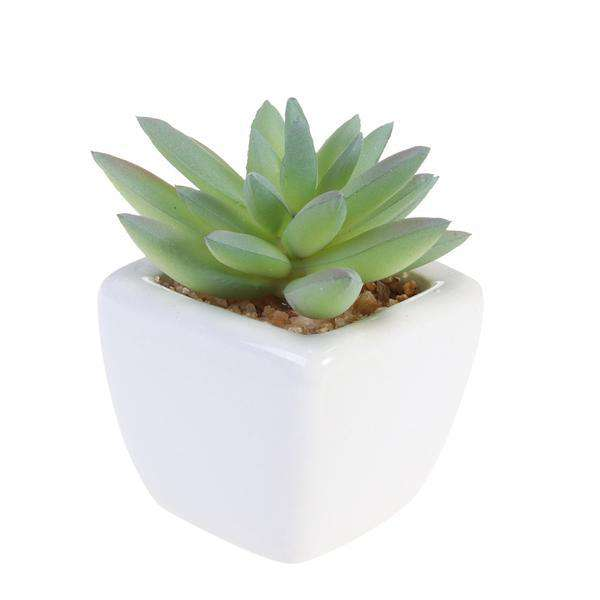 Succulent Plants - Rumor Flowers