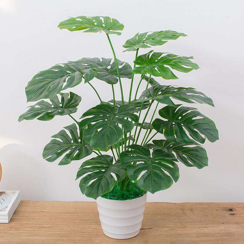 60cm Monstera Plant - Rumor Flowers