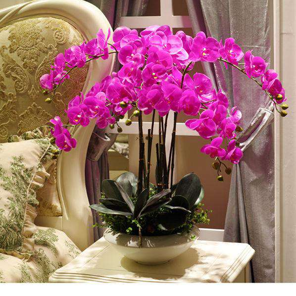 Orchid Flower - Rumor Flowers