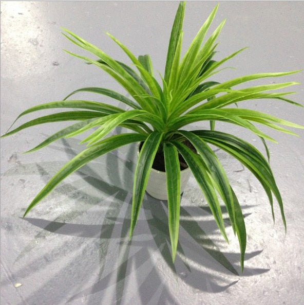 Chlorophytum Plants - Rumor Flowers