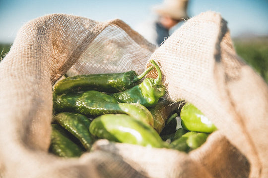 Are Hatch Green Chile Peppers Hot?